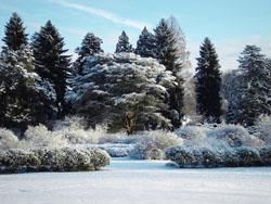 Gardens in snow